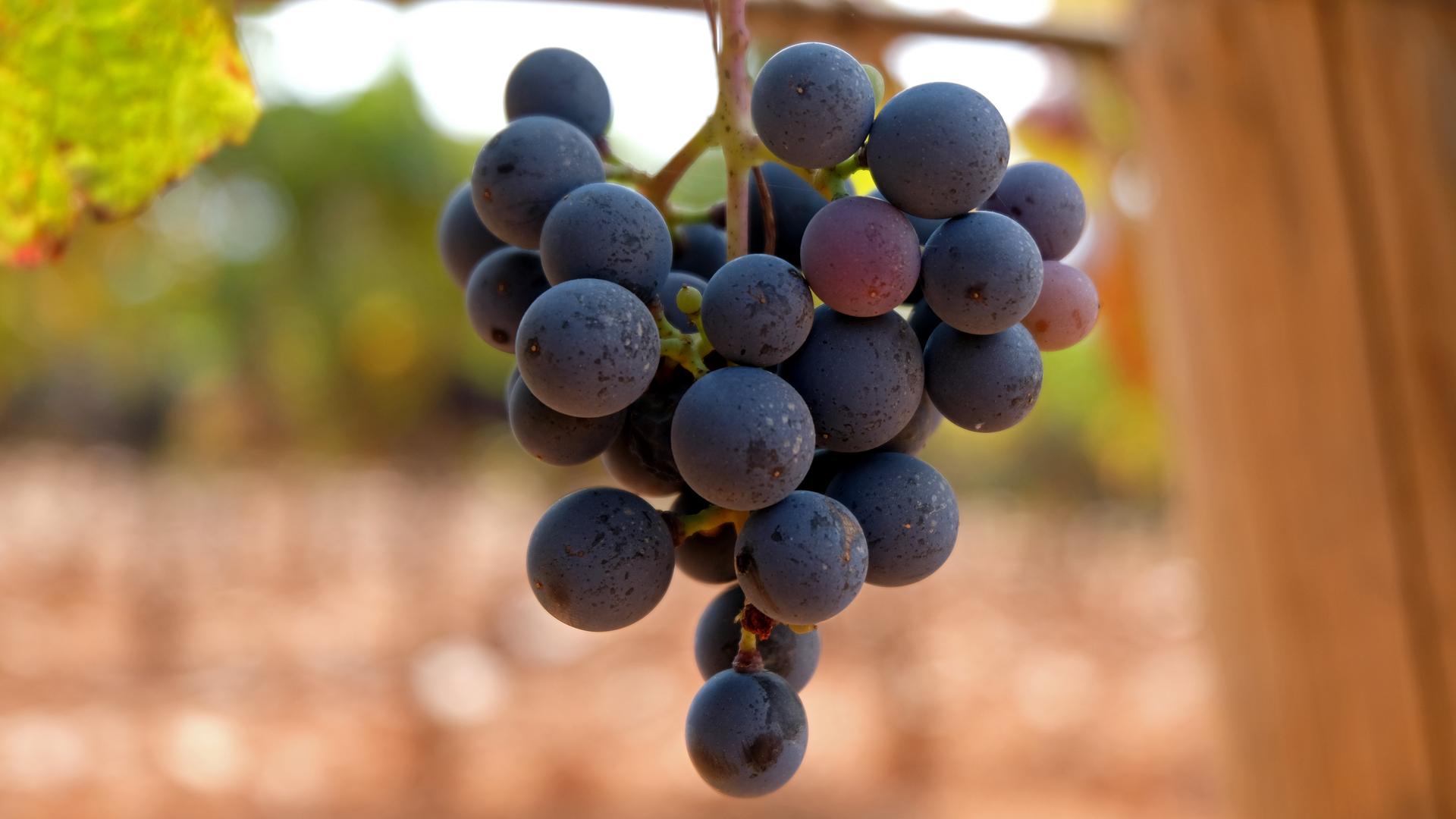 Grapes 1920x1080