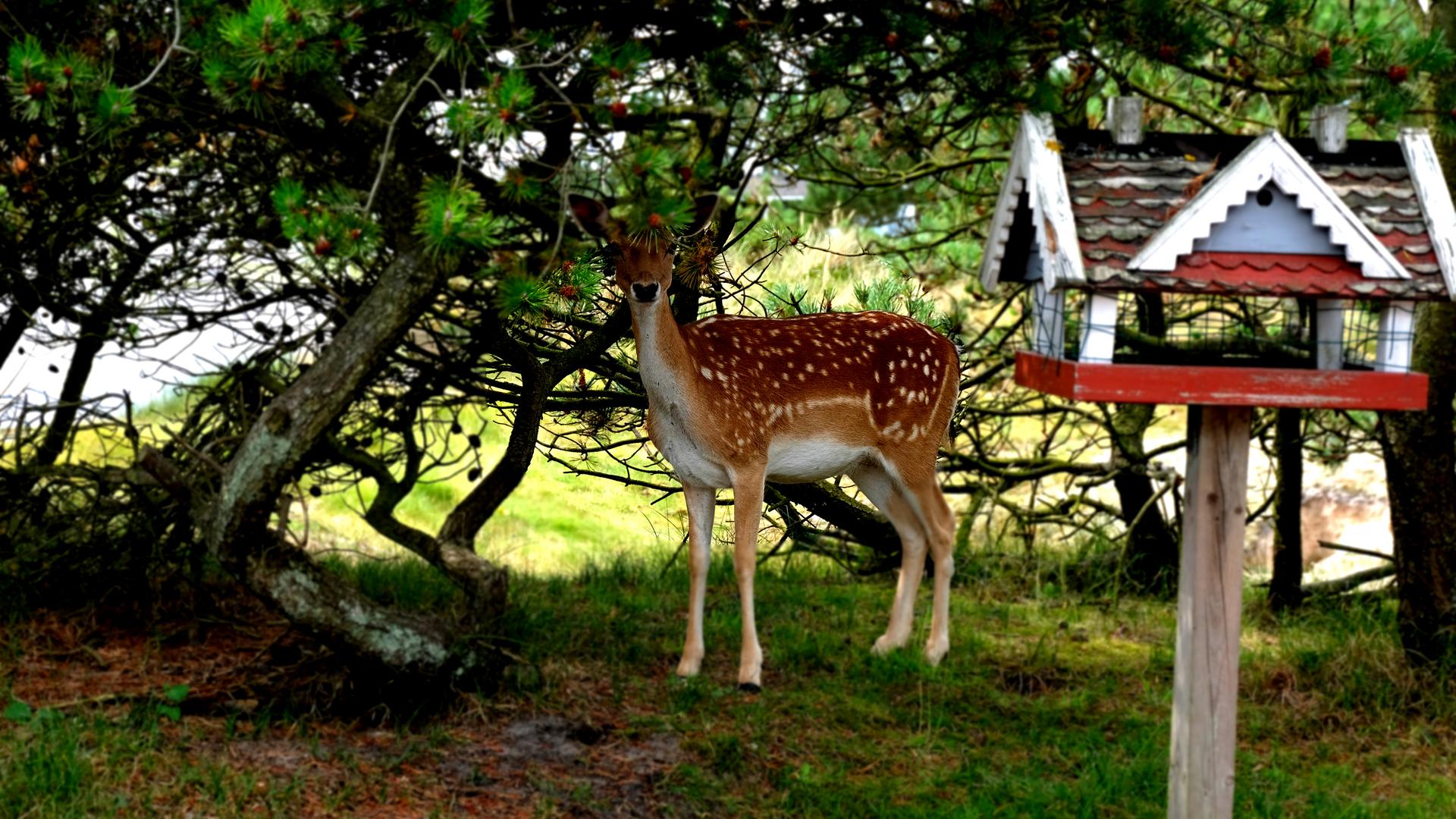 2Oh deer! 1920x1080