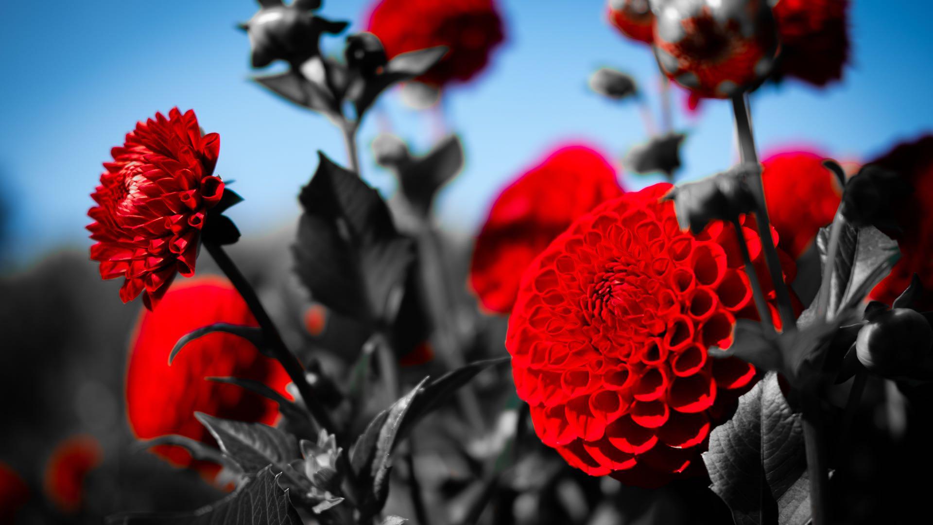 Black n Red 1920x1080