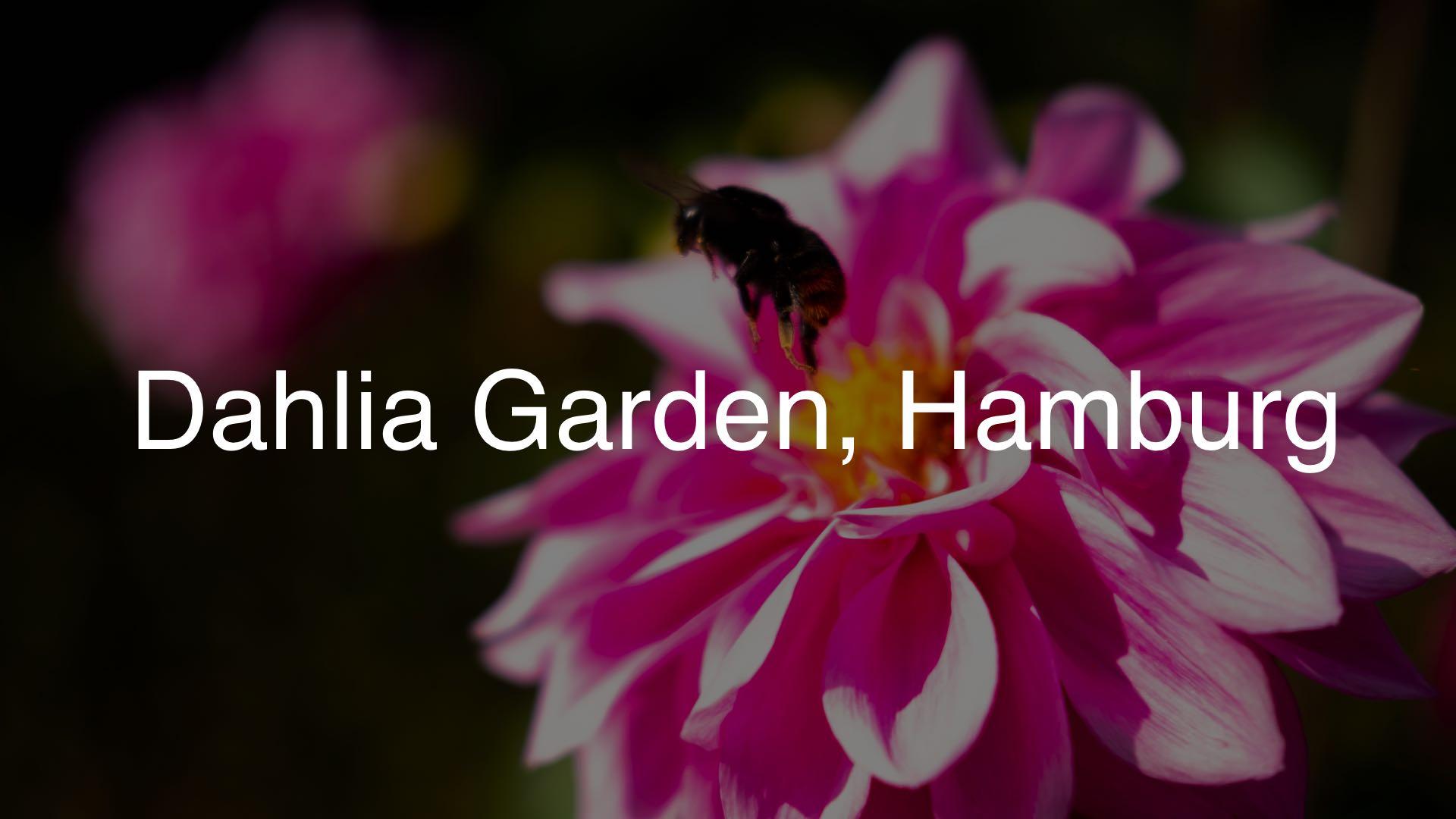 Dahlia Garden HH Header 1920x1080 dark
