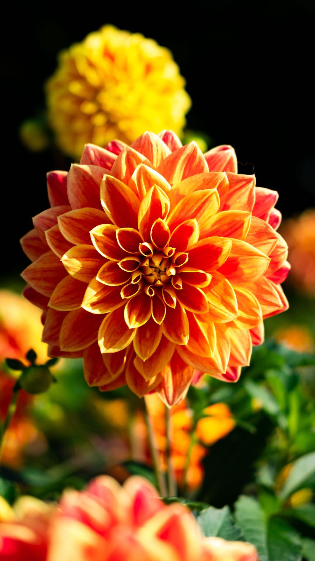 Natural Symmetry 1080x1920