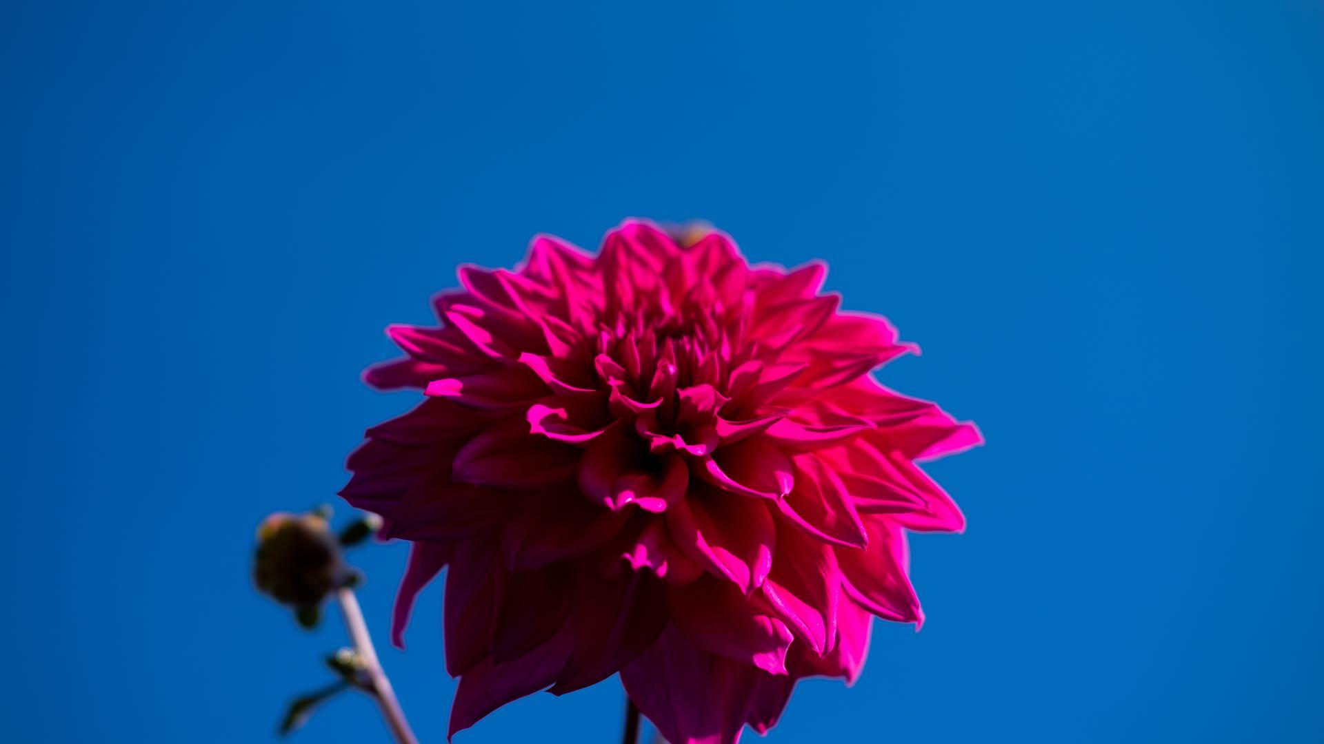 Pink n Blue 1920x1080