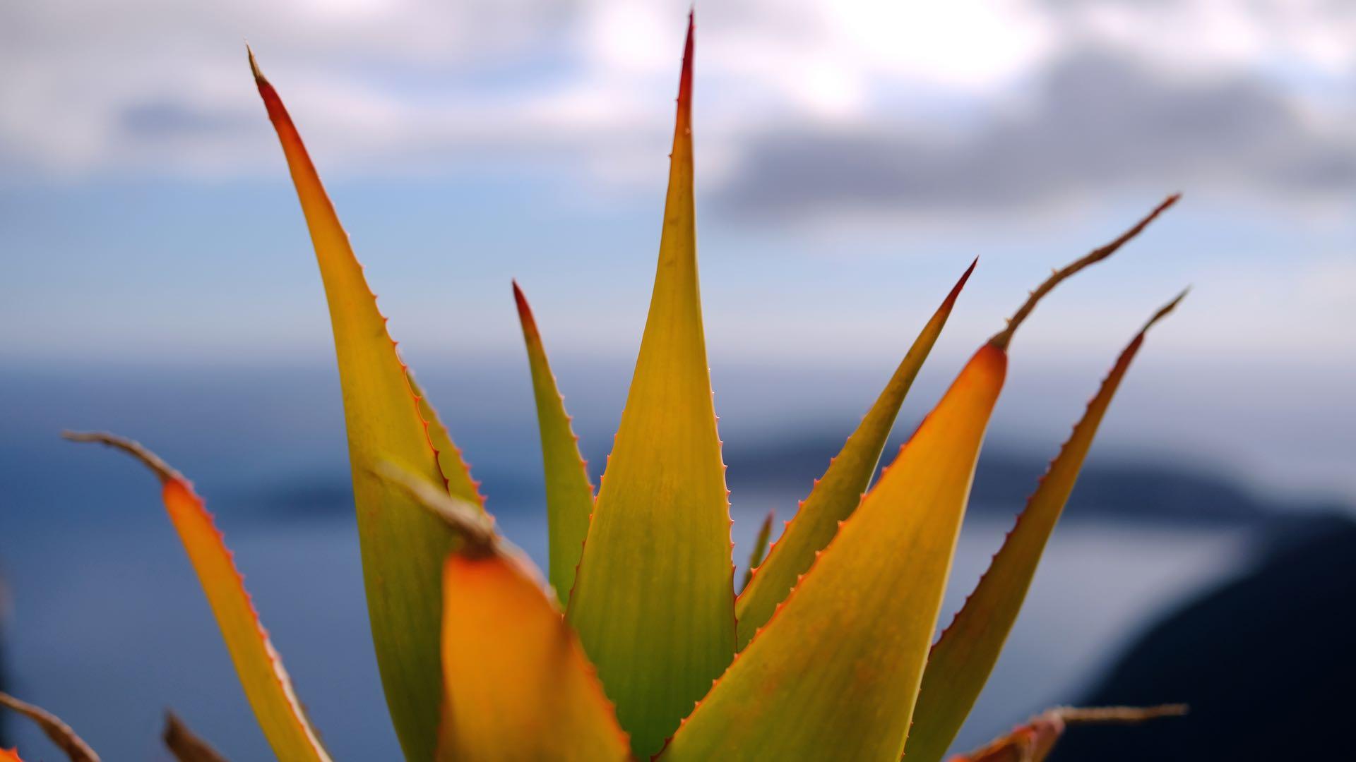 Cactus 1920x1080