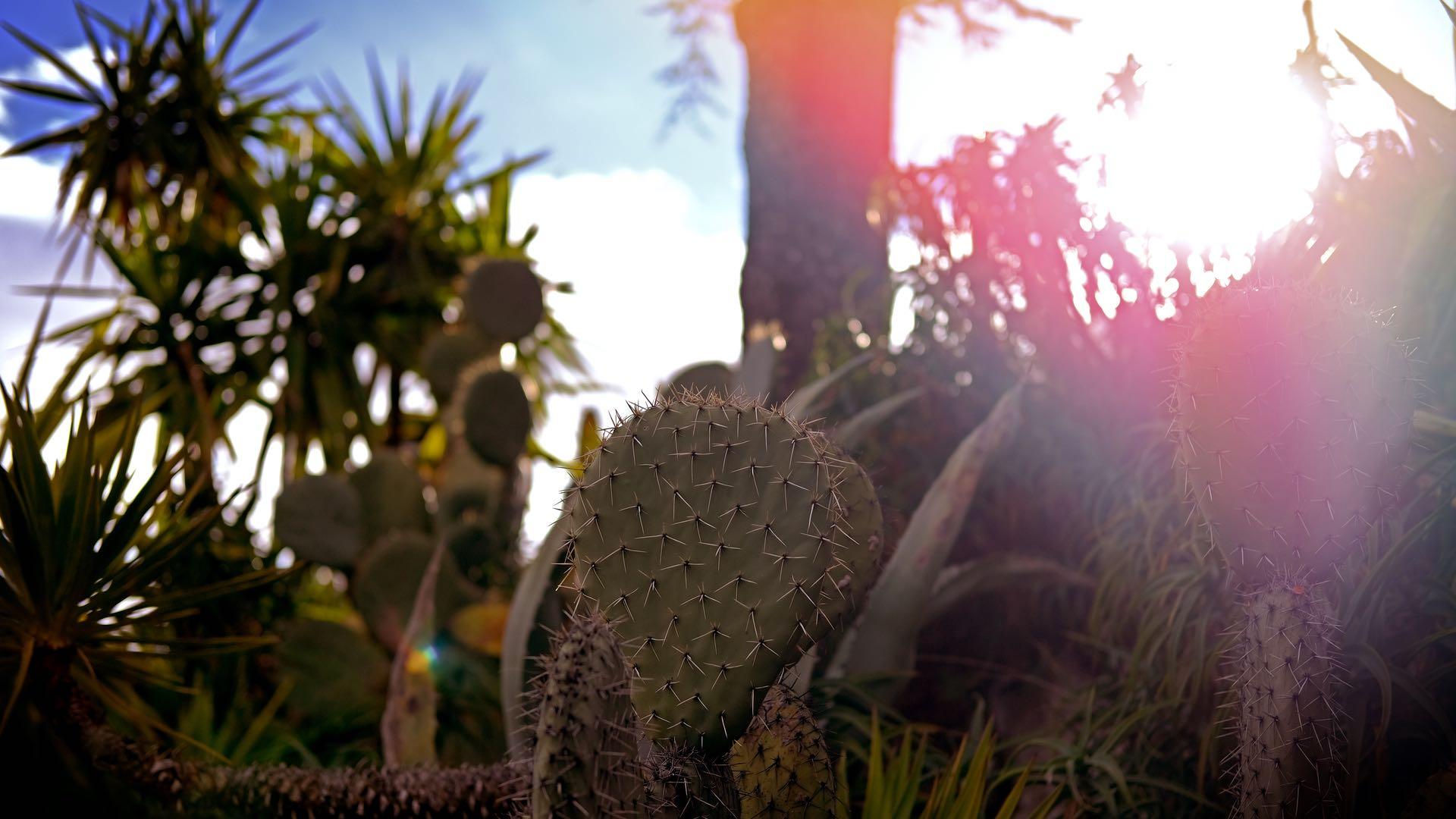 Iconic Cactus 1920x1080